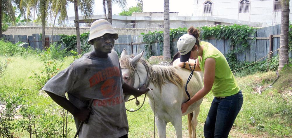 vet student in Haiti listening to donkey's heart beat