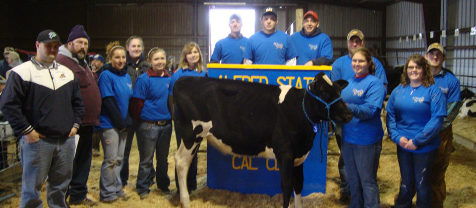 students with a cow