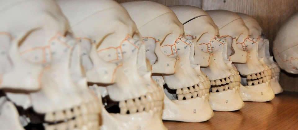 five skeleton heads