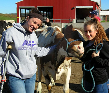 AU student on college farm with cow