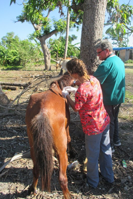Associate Professor Doug Pierson with student giving shot to a horse