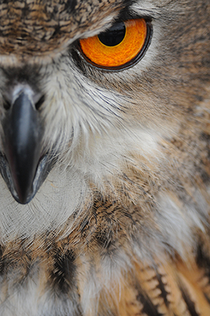 up close owl's eye