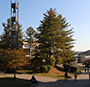 view of center of campus, bell tower, tree