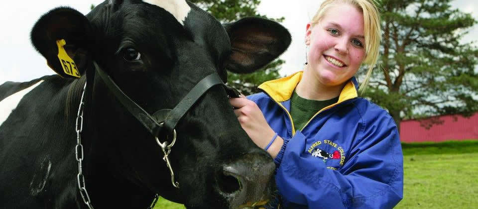 female student with a cow